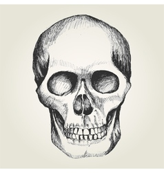 Sketch of a human skull vector image vector image
