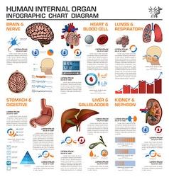 Human Internal Organ Health And Medical vector image vector image