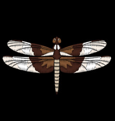 Cute embroidered dragonfly for fashion vector