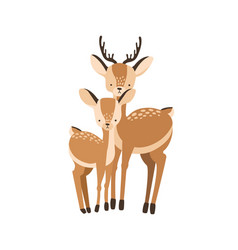 deer with fawn isolated on white background vector image