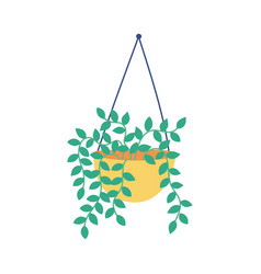 hanging potted plant decoration isolated icon vector image