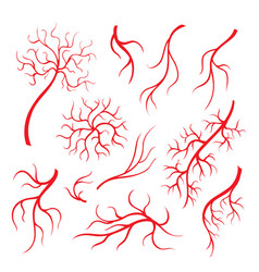 Human eye veins red capillaries blood arteries vector