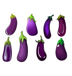 Organic fresh purple eggplant vegetables vector