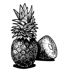 pineapples vector image