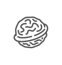 Walnut line icon vector