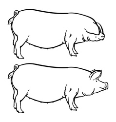 Drawing outline Hand drawn pig isolated vector image
