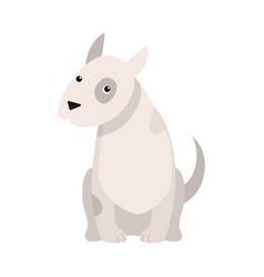 Bull terrier dog raster in flat vector