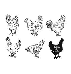 chicken and cocks sketch set vector image
