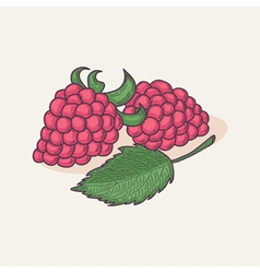 Hand drawn raspberry isolated vector image vector image