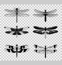 Black dragonfly icons set isolated on vector