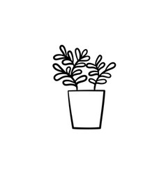 ficus in a pot hand drawn sketch icon vector image