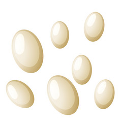 Flea eggs white background vector