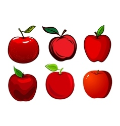 Ripe red apple fruits with leaves vector image vector image