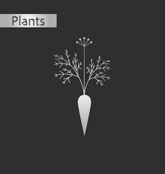 black and white style icon of carrot vector image