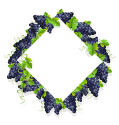 frame with black grapes vector image