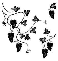 grapes set few decorative elements vector image