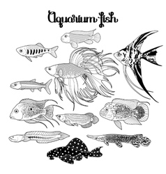 Graphic aquarium fish set vector image