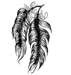 grunge feathers design vector image