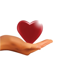 hand holding heart vector image