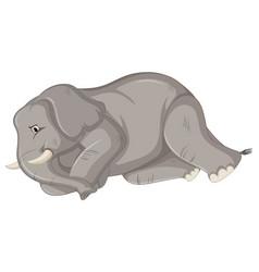 Sick elephant on white background vector