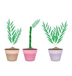 Three Bamboo Tree in Ceramic Flower Pots vector