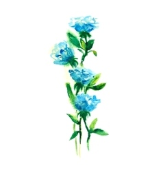 blue roses watercolor drawing vector image