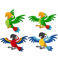 cartoon macaw collection set vector image