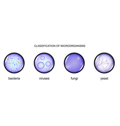 Classification of microorganisms vector