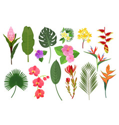 decorative exotic flowers botanical leaf tropical vector image