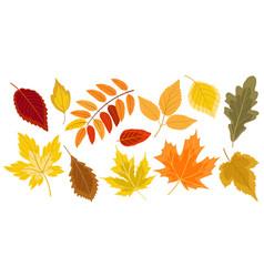 golden autumn falling leaves vector image