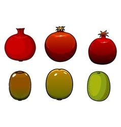 Green kiwi and pomegranates fruits vector