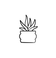 Sansevieria trifasciata hand drawn sketch icon vector