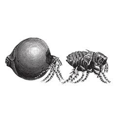 Tick vintage engraving vector