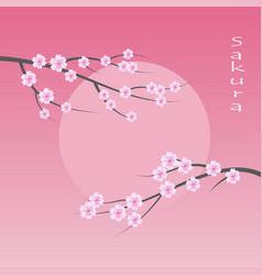 sakura blossom flowers background vector image