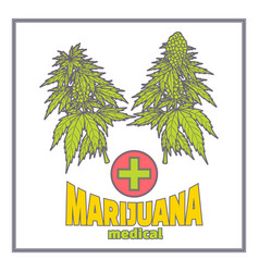 Bushes of marijuana medica flat vector