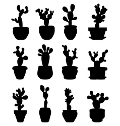 cactus at potted vector image