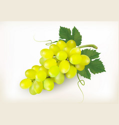 Green grapes fruit isolated on white background vector