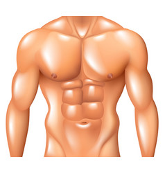 Muscular man torso fitness concept isolated vector