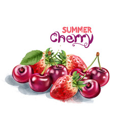 strawberry and cherry watercolor summer season vector image