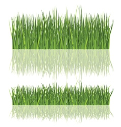 fresh grass isolated vector image