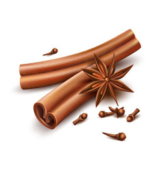 Realistic cinnamon cloves dried anise star vector