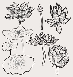 set of Beautiful monochrome hand drawn lotus vector image