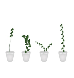 A Set of Creeper Plant in Flower Pot vector image