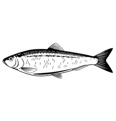 Atlantic herring black and white fish vector