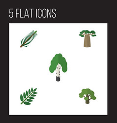Flat icon ecology set of baobab acacia leaf tree vector