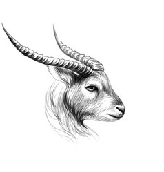 goat sketch black and white drawn portrait vector image
