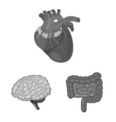 Isolated object internal and medical icon set vector