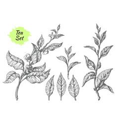 Tea hatching set vector