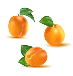 apricot set collection realistic 3d vector image