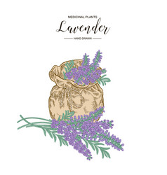 Lavender flowers with rustic bag medical plants vector
